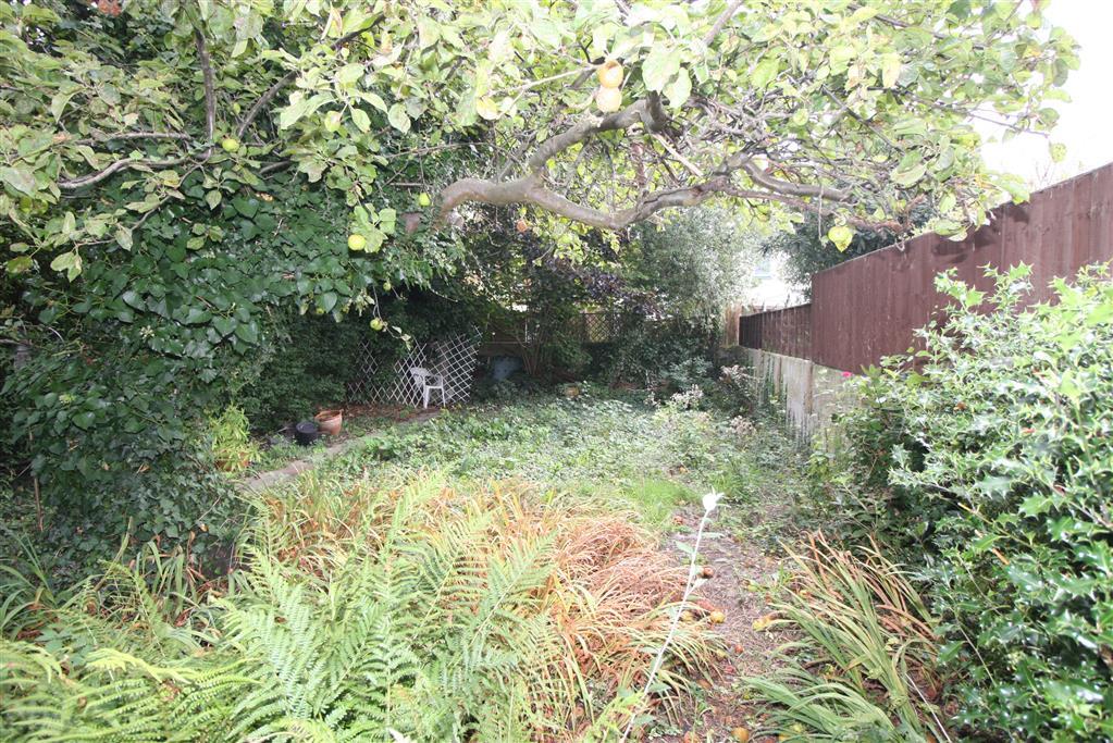 55 Jumpers Road Garden